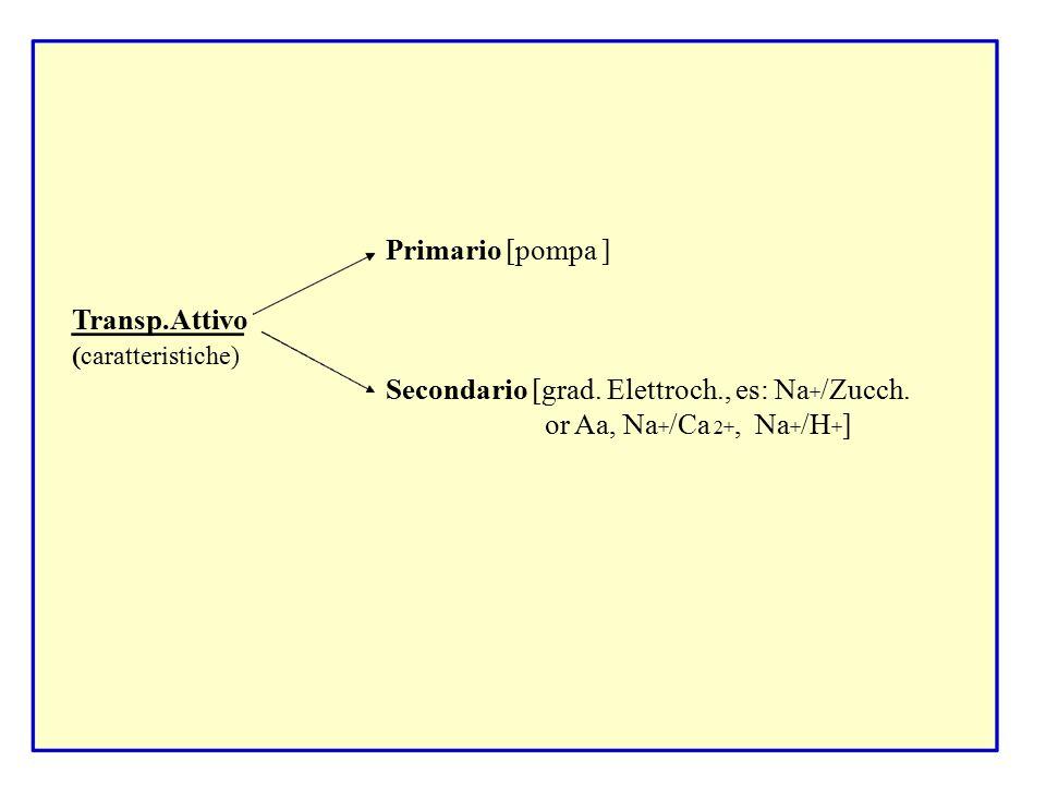 Secondario [grad. Elettroch., es: Na+/Zucch. or Aa, Na+/Ca 2+, Na+/H+]